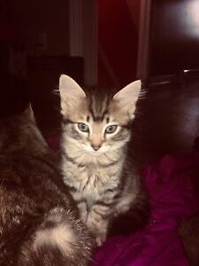 Free kittie