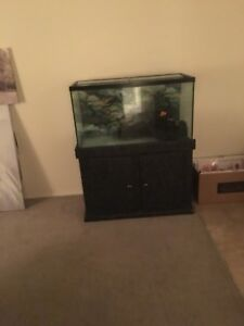 55 gallon tank for sale with stand and decorations.