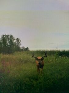 Hunting land for lease/rent