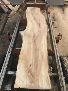 """1 3/4"""" spalted silver maple slabs"""