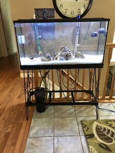 35 Gallon Saltwater Tank