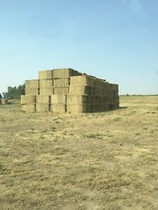 Dairy Hay For Sale