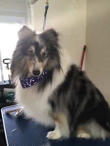 Mobile Dog Grooming in your home