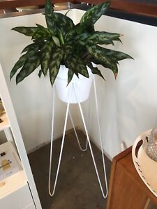Plant Stand and Plants