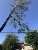 Tree removal / trimming
