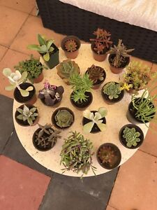 20 Amazing Pots of Succulents for $40