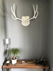 Antlers for sale