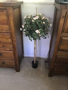 Rose tree fake. Victory Heights Gympie Area Preview