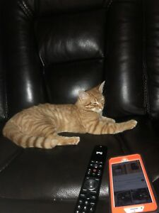 4 month old kitten for rehoming