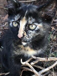 Kitten Free