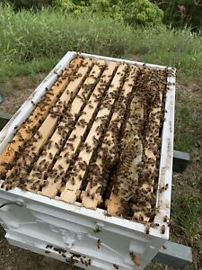 Wanted: Beehive sites wanted
