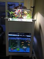Grow your own organic vegetables and Fish inside your home