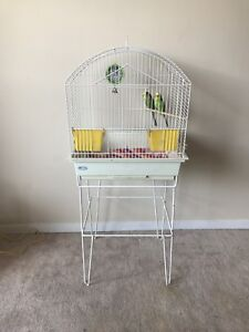 A pair of budgies, 18 months old with the cage