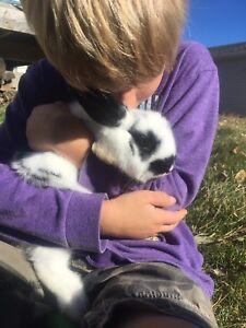 Bunny rabbit rabbits bunnies pets