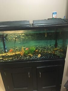 45 gallon tank everything included!!