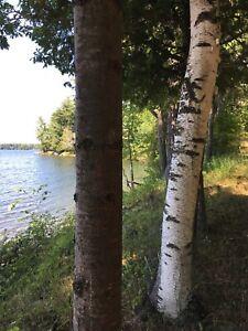 Vacant Otty Lake property