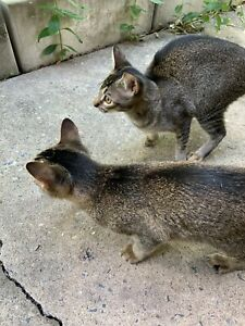 2 cute kittens for sale