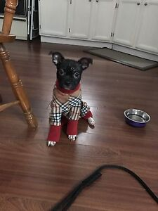 Dog coats and sweaters