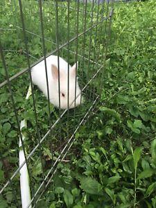 Found bunny Ingleside