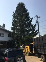 TREE SERVICES-25 ARBORIST YEARS OF EXPERIENCE-INSURED