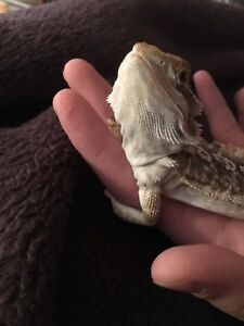 Will foster/take in/ reptile sit!