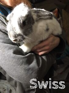 Adult 4-8lb bunnies!! pictured ones available