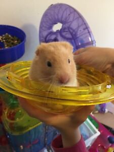 Hamster with the cage