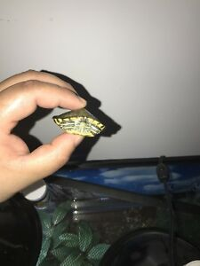 Baby red eared slider and tank