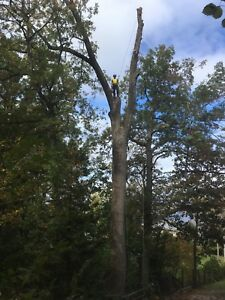 Looking to trade Tree Service for hunting property