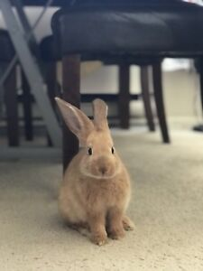 5 month old Bunny