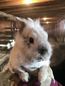 Cute Bunnies $15 each or 2/$20