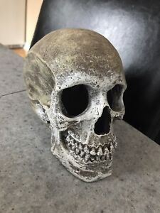 Skull Halloween Decoration