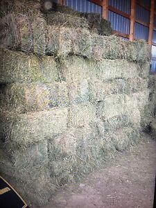 Hay square bales