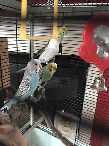 4 birds with big cage