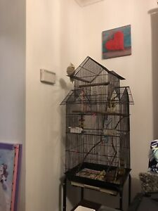 Tamed friendly cockatiel with cage Blakeview Playford Area Preview