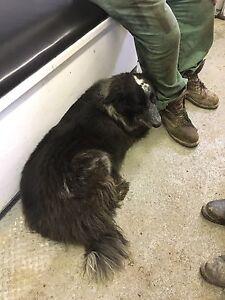 Found dog near Valhalla