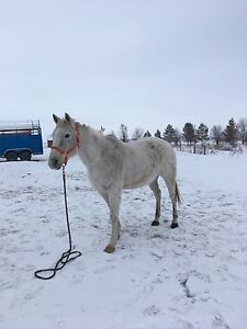 Reduced for this week only! Broke gelding