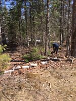 Tree and brush removal