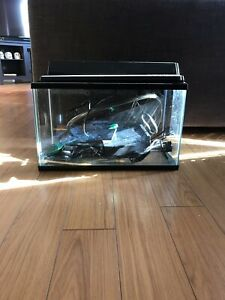 Fish tank with everything included