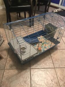Selling baby guinea pig