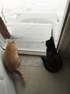 Two cats to be re-homed - 40$ for both OBO