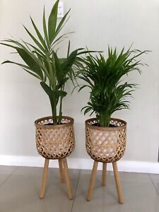 Indoor plants potted with stands. $65 each firm.