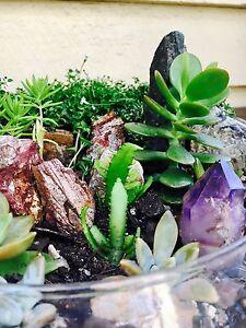 Succulent Garden in Glass Vase Tarragindi Brisbane South West Preview