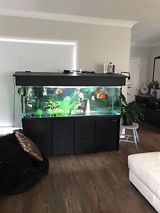6ft Tank Package Upper Coomera Gold Coast North Preview