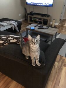 Cats for a great home