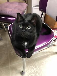 Looking to rehome our cat Batman