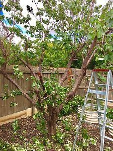 Tree and plant removal service,  ALL AREAS Derrimut Brimbank Area Preview
