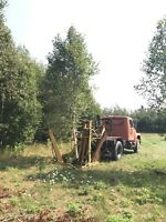 TREE SPADE FOR HIRE AND TREES FOR SALE