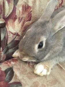 Adorable and sociable Rabbits/Bunnies for sale!