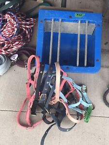 Foal feeder and halters